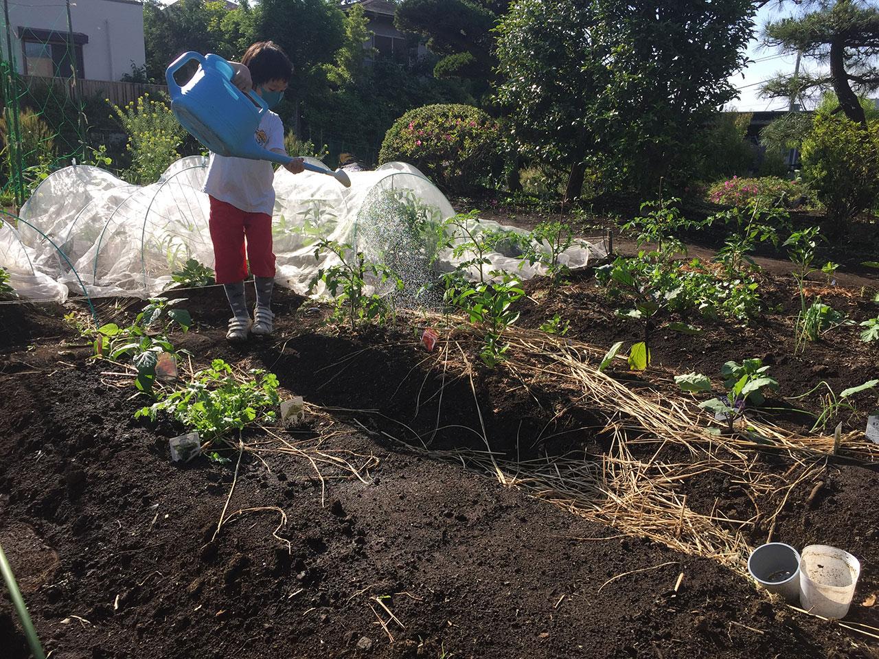 野菜づくり | ONDwebの畑